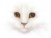 White Cat Face 1